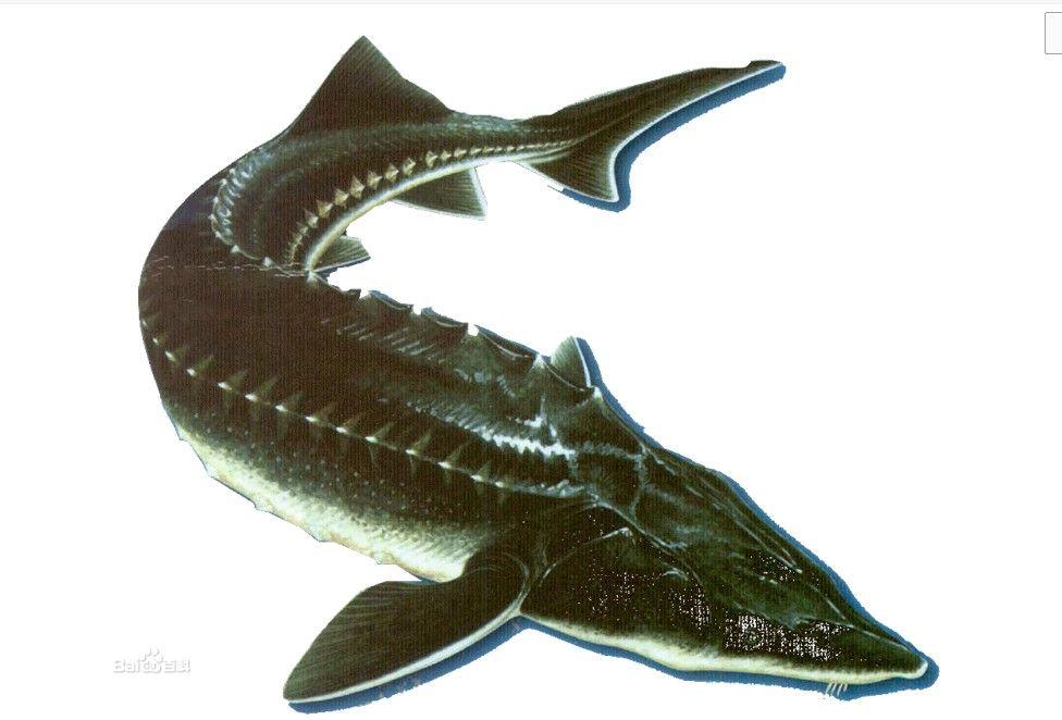 白癜风能吃鱼吗